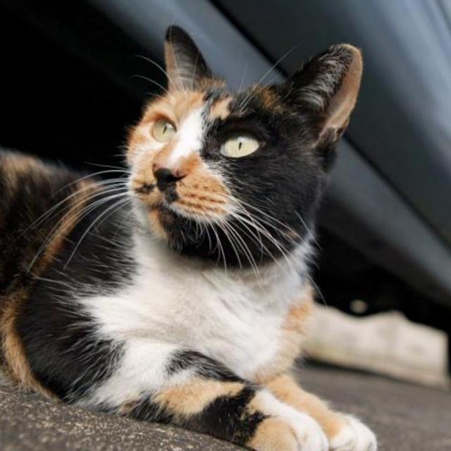 Какие кошки приносят удачу в дом