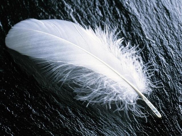 Перья павлина в доме: примета беды или богатства