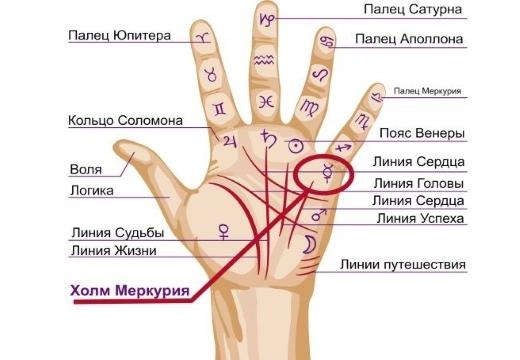 Холм Меркурия на руке: значение и расшифровка