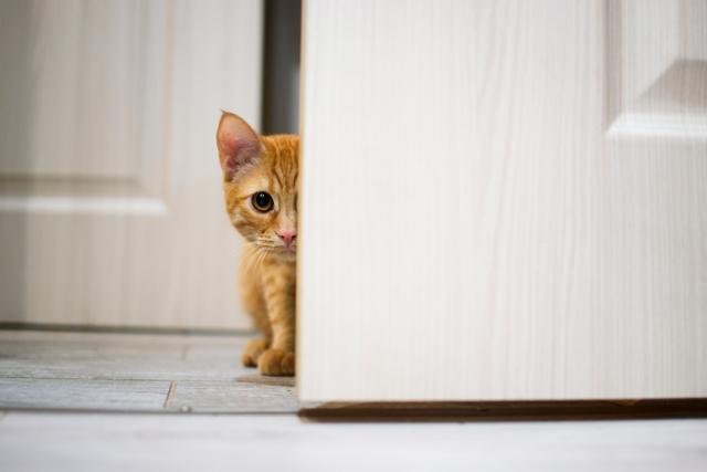 Рыжий кот в доме: толкование приметы, что значит если пришел
