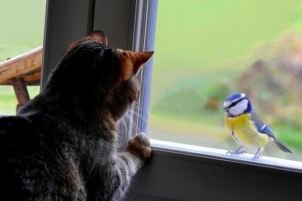 Синица залетела в окно: примета, ее толкование и предостережения