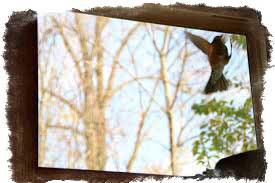 Птица бьется в стекло - к несчастью или нежданной радости