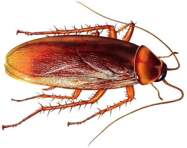 Заговор от тараканов: как избавиться раз и навсегда в домашних условиях