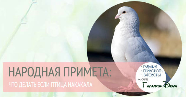 Птица накакала на голову, на одежду: примета и ее толкование