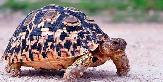Тотемное животное: как узнать по знаку зодиака, тест для определения