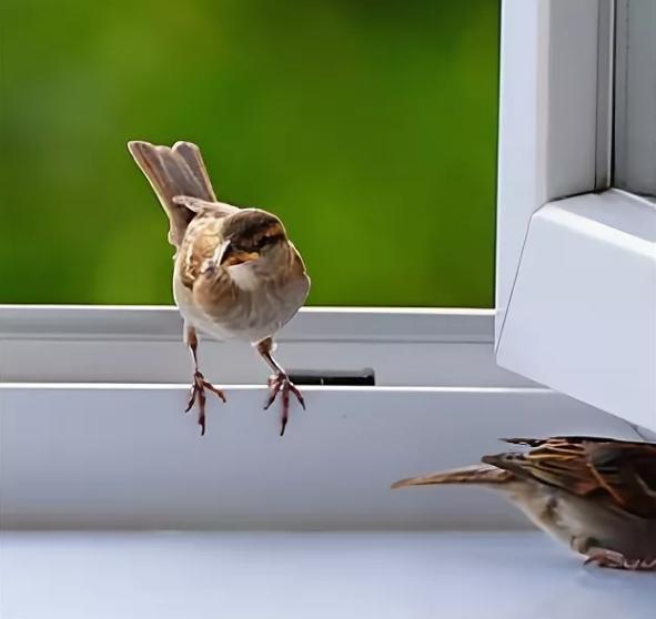 К чему воробей залетел в дом, окно: примета