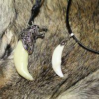 Волчий клык: амулет-талисман зверя, шаманские секреты