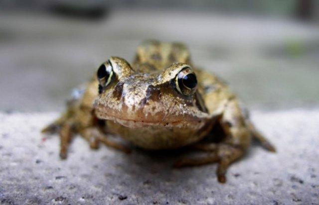 Лягушка в доме или на дороге: примета об удаче