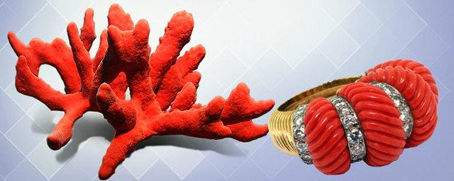 Свойства камня коралл: лечебные, волшебные, сочетаемость по Зодиаку и имени
