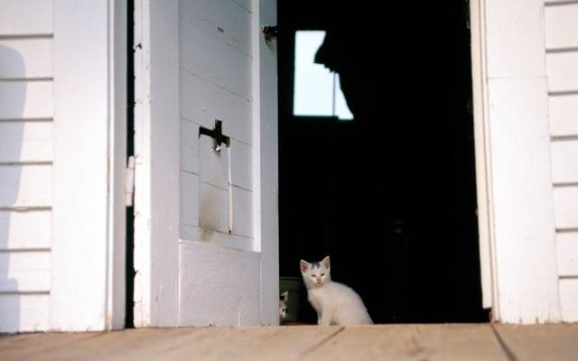 Кошка пришла в дом: примета и ее толкование, брать ли себе чужого кота