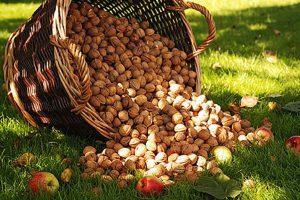 Ореховый и хлебный спас: приметы и обычаи