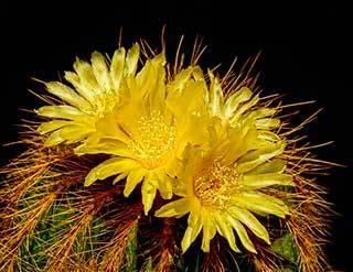 Зацвел кактус: примета и ее значение