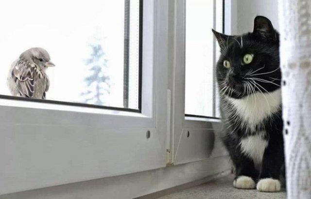 Воробей стучит в окно: примета, толкование и отведение негатива прочь