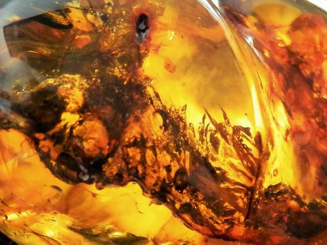 Свойства камня янтарь: лечебные, магические, кому подходит по Зодиаку