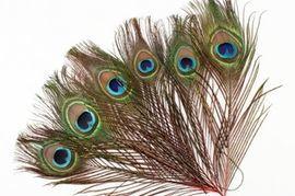 Найти перо птицы: примета и тонкости ее толкования